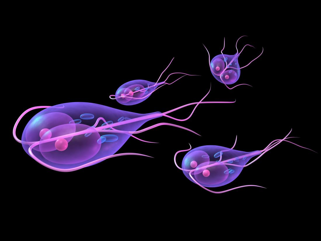giardia disease causes