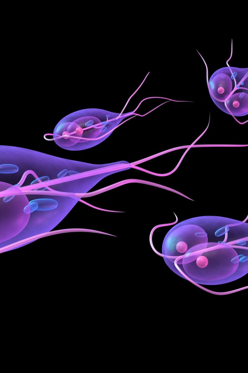 Recovery from giardia infection