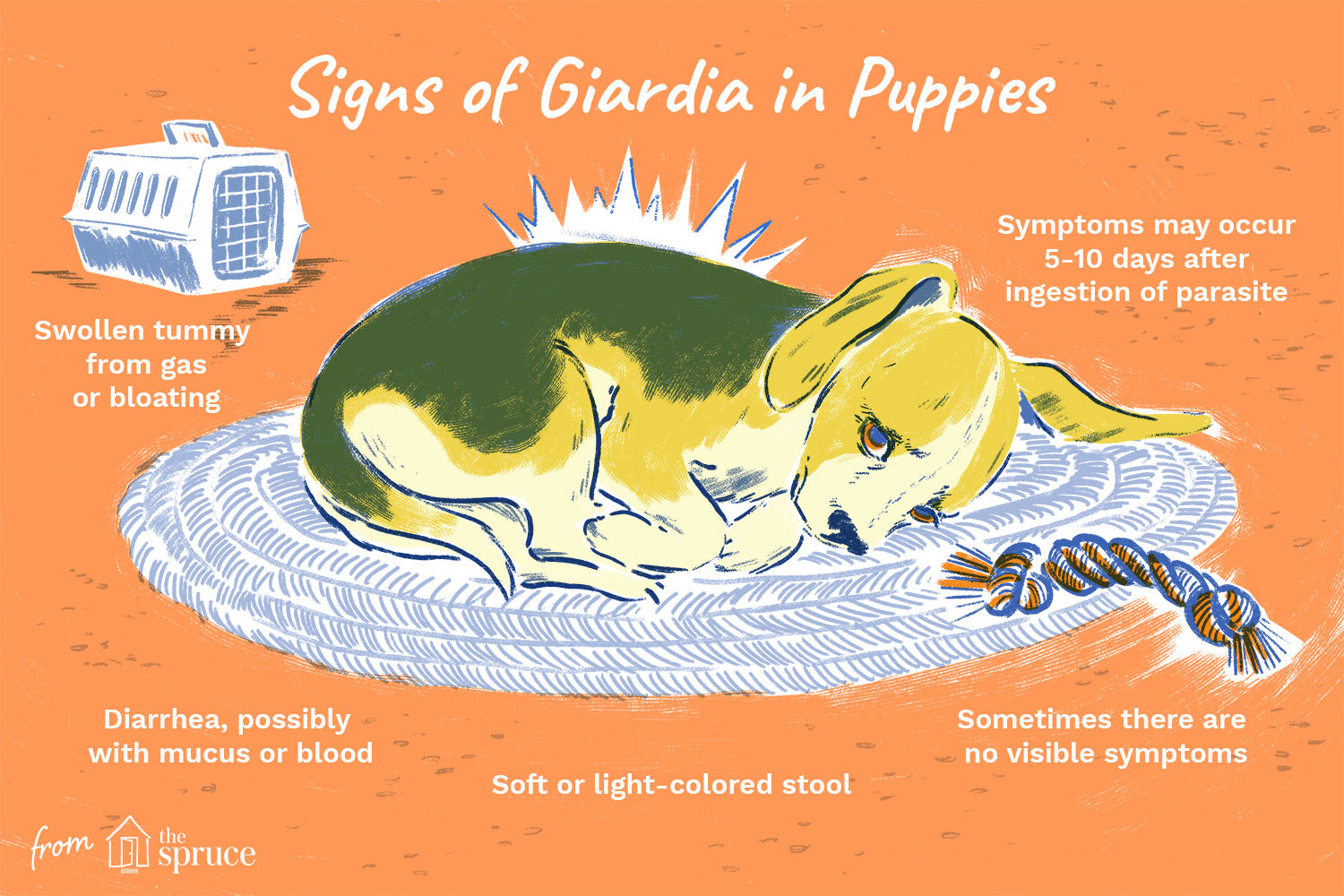 giardia and coccidia natural treatment